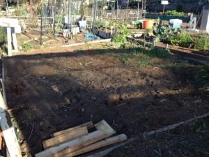 pre-garden 1