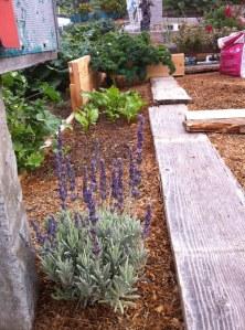 lavendar_03202013