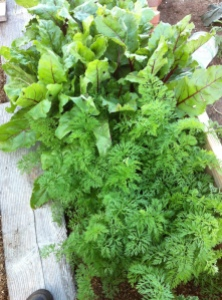 homegrown carrot & beet greens via it's jou life - http://wp.me/p3cljj-8U