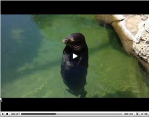 spinning seal via it's jou life http://wp.me/p3cljj-97