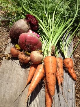 beets & carrots via it's jou life http://wp.me/p3cljj-aI