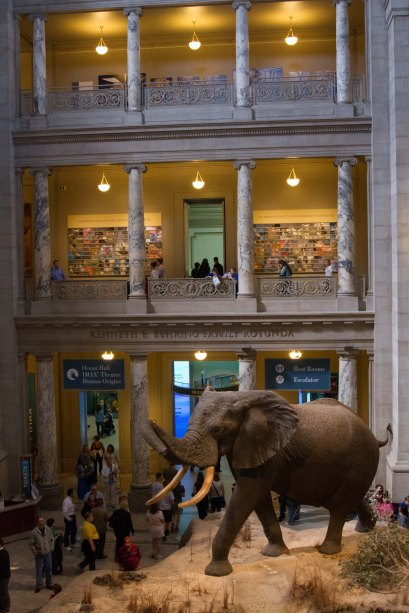 Natural History Museum via it's jou life http://wp.me/p3cljj-ad