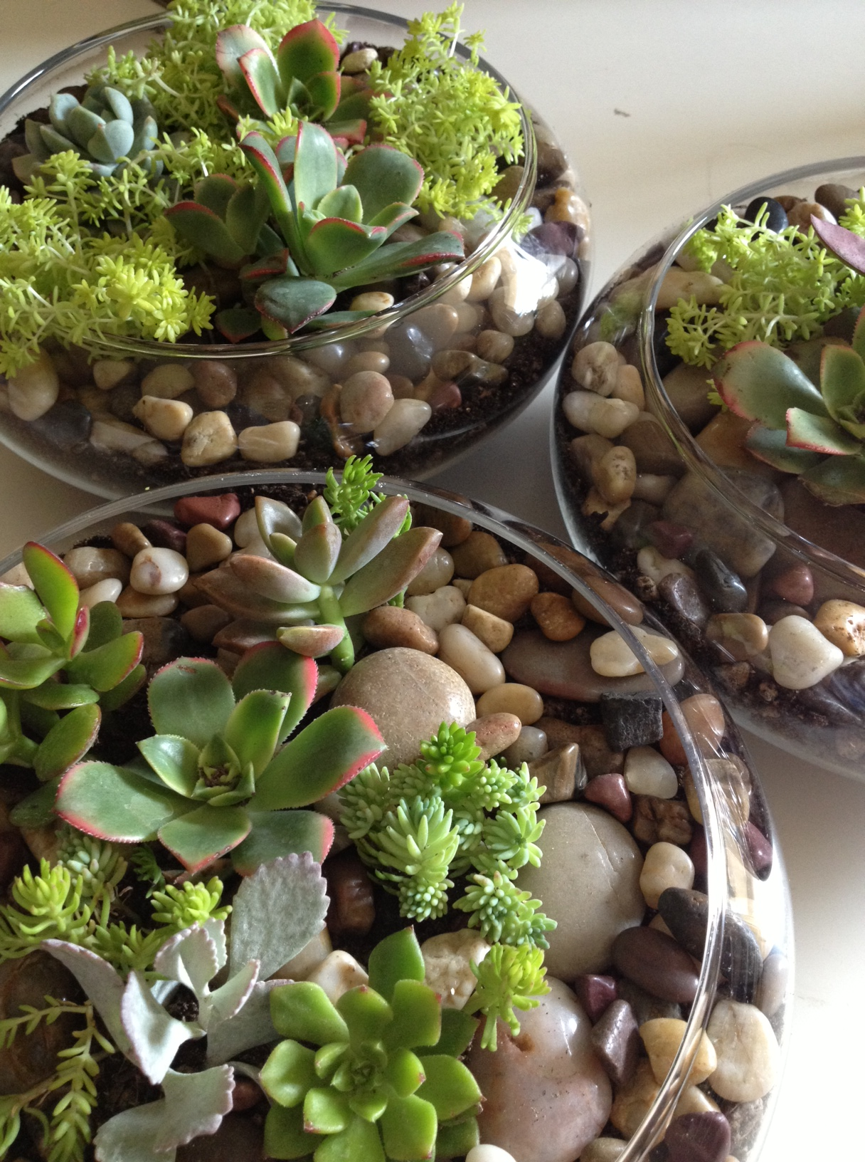 Diy Succulent Wedding Centerpiece It S Jou Life