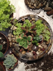 DIY succulent centerpiece via it's jou life blog http://wp.me/p3cljj-bH