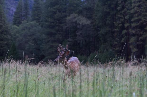 2015 Deer